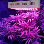 1000W 100PCS 10W LED Plant Grow Light 85V-265V EU/US/UK Power